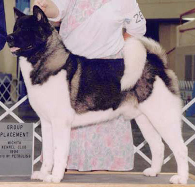 AKC CH Chereed's The Terminator